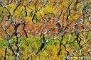 Farbrausch auf der Hochebene von Mesa Verde