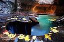 Herrlich leuchtete das bunte Herbstlaub in den Canyons rund um Sedona und in der Subway im Zion Nationalpark...