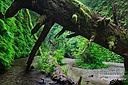 Der idyllische Fern Canyon im Prairie Creek Redwoods S.P. im Norden Kaliforniens