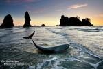 Stranded Dolphin