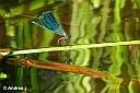 Auch wenn andere wiederum fast nicht hinterher kamen, weil die zahllosen Libellen am Uferbereich einfach zu fotogen waren. :-)