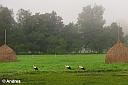 Ebenfalls nicht wegzudenken aus dem Spreewald sind die vielen Störche im Sommer. Andrea hat bei ihrem morgendlichen Spaziergang gleich etliche auf der Wiese bei Lehde angetroffen.