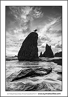 Abendstimmung bei den Split Rocks an der Rialto Beach im Olympic National Park