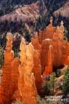 Der Bryce Canyon Nationalpark im US-Bundesstaat Utah öffnet nach 10-tägiger Schließung endlich wieder seine Tore für Besucher aus aller Welt.