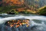 Ganz kurios war auch dieser Stein mitten im Fluss in der Edmundsklamm im Elbsandsteingebirge. Das Wasser der Kamenice schoss ständig über ihn hinweg und trotzdem konnte es das am Gras haftenden Herbstlaub nicht mitreißen.