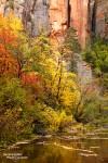 Jeden Herbst gegen Ende Oktober leuchtet der Wald im West Fork of the Oak Creek in allen Farben.