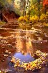 Der West Fork of the Oak Creek zählt im Herbst zu den schönsten Ausflugzielen rund um Sedona.