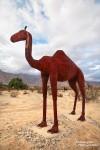 Brav und friedlich stehen in der Nähe ein paar Kamele herum.