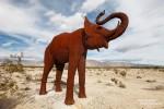 Es sind aber seit einigen Jahren auch ein paar recht ungewöhnliche Tiere in Borrego Springs beheimatet, wie zum Beispiel dieser afrikanische Elefant.
