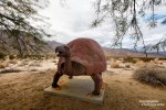 Heute war es relativ stark bewölkt, aber diese Desert Tortoise versteckt sich wohl ganzjährig vor der gnadelosen Sonne.