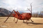 Einige von ihnen nehmen aber sicherlich nur hier in Borrego Springs solche Dimensionen an, z.B. dieser riesige Grashopper (Grashüpfer)... ;-)