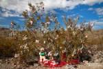 Kreosotbusch auf dem Oatman Topock Hwy im weihnachtlich festlichen Look - von der bunten Kugel, den Girlanden, Teddybären bis hin zu riesigen Schneeflocken, es fehlte an nichts!