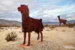 Da möchte ich lieber gar nicht wissen, wie sich die ordentlich bewollten Lamas dann so fühlen... ;-)