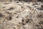 Wer sich auf Safari begibt, sollte das übrigens besser nicht in einem Pkw machen, die Eingrabspuren von so manchem Besucher waren noch gut sichtbar! Dann lieber 3 Schritte mehr zu Fuß gehen... ;-)
