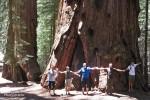 Größenvergleich vor einer Mariposa Grove Sequoia im Yosemite NP