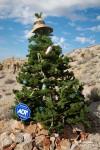 Ebenfalls stilsicher, ein mit Bier- und Whiskeydosen dekorierter Tannenbaum mitten in der Einöde