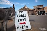Dauerhungrig warten sie schon direkt am Burro Food Verkaufsstand