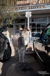 Und kaum hatten wir das Auto geparkt, stand da auch schon der erste süße Burro neben unserer Tür.