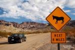 Nicht nur Esel wurden am Oatman Topock Highway gesichtet, auch ein Mustang raste vorbei... ;-)