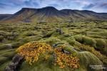 Die goldenen Tupfer des Herbstlaubs machen die bemoosten Lavafelsbrocken noch fotogener.