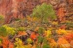 Im Zion Canyon hingegen muss nichts drapiert werden, dort leuchtet das farbenfrohe Herbstlaub an allen Ecken.