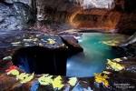 Auch ein ganz besonderer Platz im Zion, die sog. Subway mit Herbstlaub