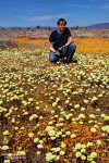 Da strahlt der Besucher, wenn in der Wüste die Wildblumen blühen. ;-)