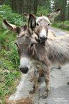 Jemand hatte mich doch gefragt, ob es denn in Spanien Wildlife gibt... Nun hier ein Beweisfoto, diese vier süßen Pelzohren haben unsere Auffahrt zum Bosque etwas verzögert. ;-)