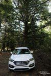 Oben angekommen am Trailhead fanden wir auch schnell eine nette (und völlig kostenlose) National Forest Campsite.