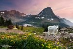 Etwas Ruhe kehrt beim Hidden Lake im Glacier Nationalpark nur noch nach Sonnenuntergang ein. Trotz seiner eher entlegenen Lage fernab sämtlicher Großstädte zählt er zu den beliebtesten Nationalparks der USA.