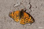 Zahllose Schmetterlinge flatterten dort im April und Mai herum...