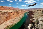 Der majestätische Kalifornische Kondor zieht seit einigen Jahren wieder seine Kreise am Himmel über dem Marble Canyon.