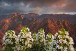 Stimmungsvoller Sonnenuntergang in den Bergen von Gran Canaria