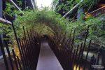 Recht originell der Zugang zu den Zimmern, es ging durch einen kleinen Bambusdschungel mit Vogelgezwitscher.