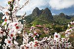 Wir mussten zwar etwas suchen, aber an manchen Stellen sah sie wunderschön aus, die Mandelblüte Ende Januar auf Gran Canaria.