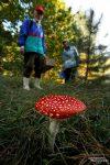Geführte Pilzsuche im Biosphärenreservat Oberlausitz - dieser war nur schön, nicht essbar! ;-)
