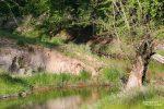 Erst an der Spree wurden wir fündig: An einer lehmigen Steilwand hatte sich ein Eisvogel seine Bruthöhle gegraben.
