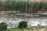 Suchbild... nicht selten sieht man die winzig kleinen Eisvögel so wie hier, nämlich nahezu gar nicht. Einer hockt auf dem linken Stock vorne am Wasser. Aufgenommen mit dem 400-mm-Tele! ;-)