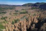 Die Anzahl an toten Bäumen in der Kernzone des Nationalparks Sächsische Schweiz ist derzeit wirklich erschreckend.