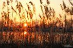 Neben herrlichen Spiegelungen gefällt uns dort auch der Blick durchs Schilf auf die untergehende Sonne.